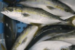 魚1711271-min