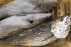 魚1711273-min