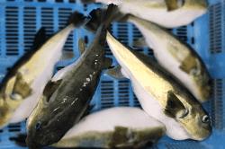 魚1711275-min