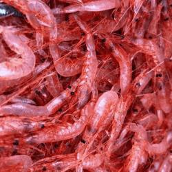 魚と畑1711292-min