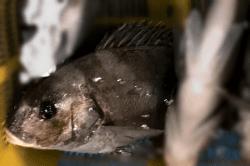 魚1711301-min