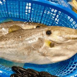 魚と畑171130-min