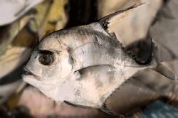 魚1712062-min