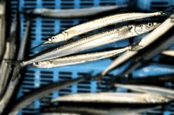 魚1712082-min