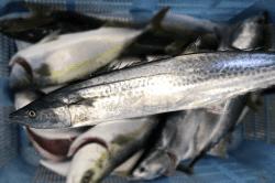 魚1712084-min