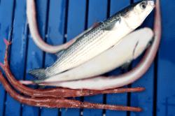 魚1712111-min