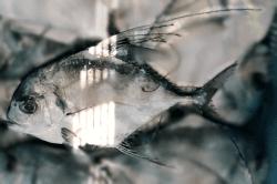 魚1712112-min