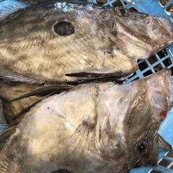 魚と畑180112-min