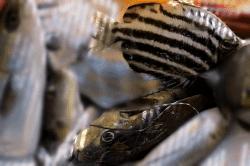 魚1801192-min