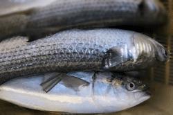 魚1801193-min