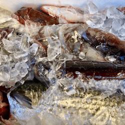 魚と畑180126-min