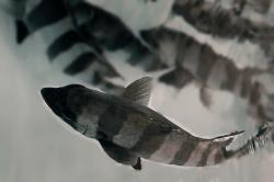 魚1802132-min