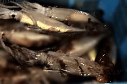 魚1802143-min