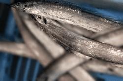 魚180216-min