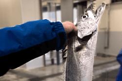 魚1802164-min
