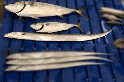 魚1802211-min