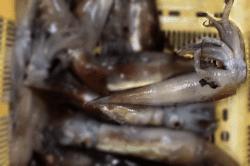 魚1802212-min