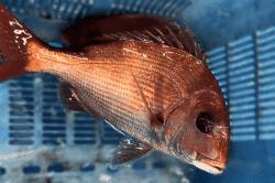魚1802271-min