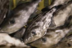 魚1802273-min