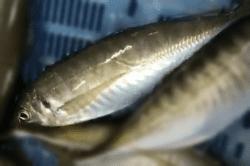 魚1802274-min