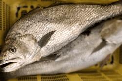魚1802052-min