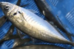 魚1803124-min
