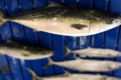 魚1803132-min