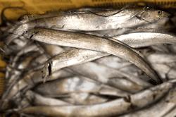 魚1803133-min