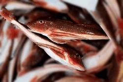 魚1803141-min