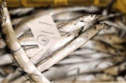 魚1803144-min