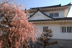 水口城しだれ桜-min