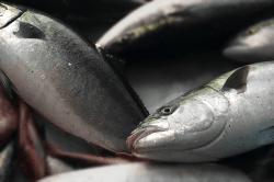 魚1804021-min