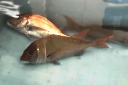 魚1804023-min
