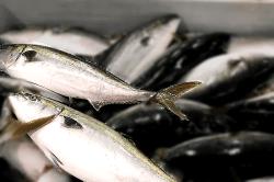 魚1804033-min