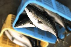 魚1804042-min