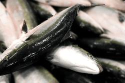 魚1804061-min
