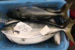 魚1804112-min