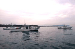 魚用宗180411-min