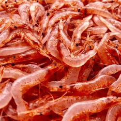 魚と畑1704112-min