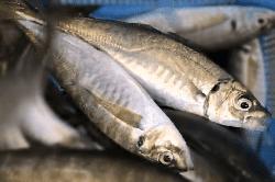 魚1804161-min