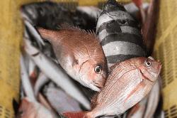 魚1804231-min