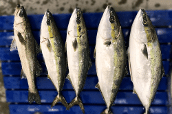 魚1804232-min