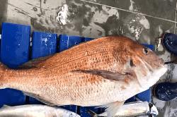 魚1805021-min