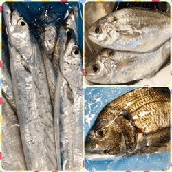 魚と畑180509-min
