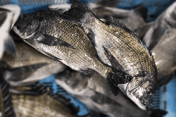 魚1805101-min