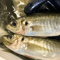 魚と畑180511-min