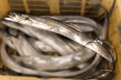 魚1805141-min
