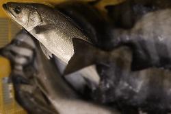 魚1805151-min