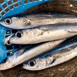 魚と畑180601-min