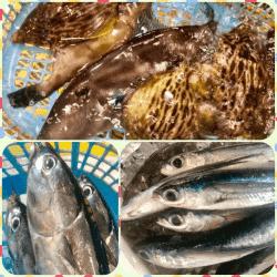 魚と畑180627-min